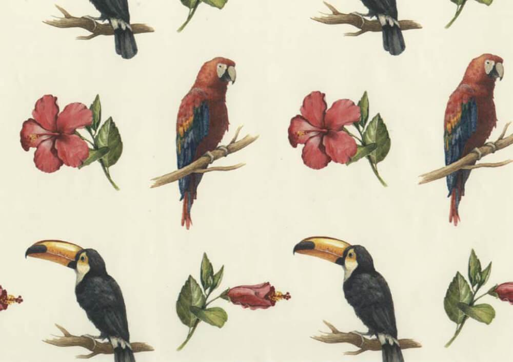 Carta regalo personalizzata stampa carta regalo personalizzata Uccelli